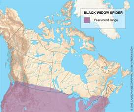 black widow california map range map for the black widow spider wildlife of bc
