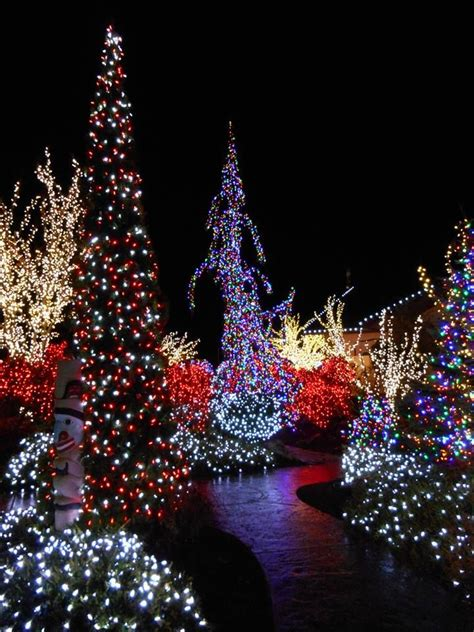 christmas trees bellingham wa best 25 lights display ideas on diy yard displays diy