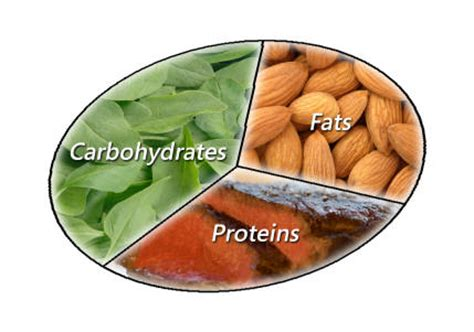 carbohydrates proteins fats and water are essential losing weight while marathon impossible
