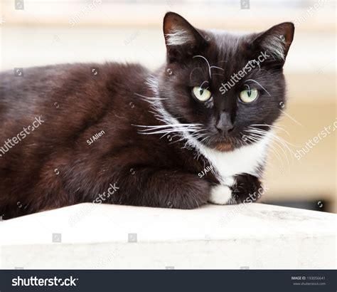 Dress Eye Catz oakley cats white black www panaust au