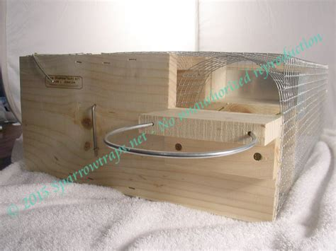 house sparrow trap plans house sparrow trap plans numberedtype