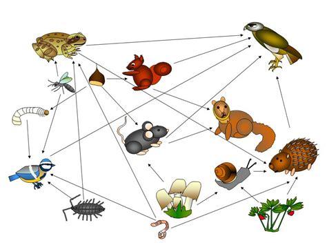 schema catena alimentare catena alimentare un bosco di relazioni