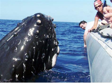 boat trip to hawaii whale watching tours marine life tours oahu tours