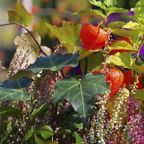 Winterbepflanzung F R Balkonk Sten Und K Bel Garten 5400 by Herbstblumen Garten Winterhart Garten Blumen Winterhart