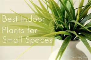 Best Inside Plants by The Best Indoor Plants For Small Spaces Tiny Living