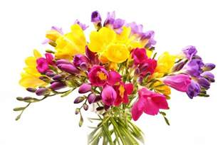 Wild Orchid Home Decor Freesia Flower Bouquet Images