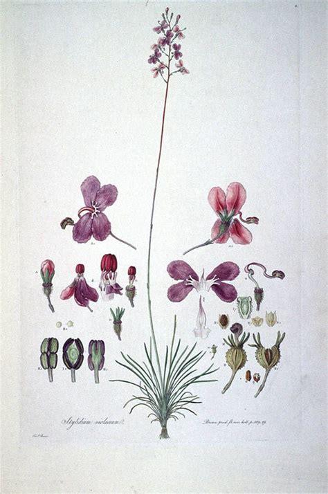 Aloe Vera Pflanzen 1916 by 160 Best Beautiful Botanical Biology Works Images On
