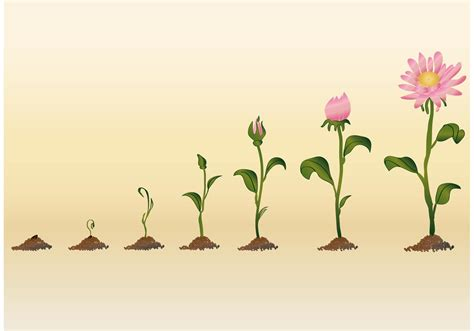 growing flower vectors download free vector art stock