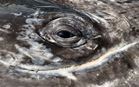 whale eye collection of whale photos magnificent nature at its best
