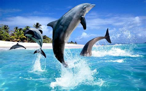 google images dolphins dolphin hd live wallpaper android apps on google play