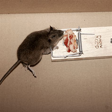 how to get rid of mice in the house how to get rid of squirrels how to get rid of stuff