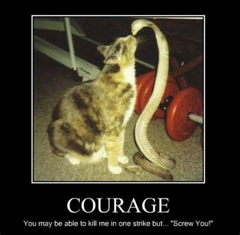 Courage Memes - courage funny pictures quotes pics photos images