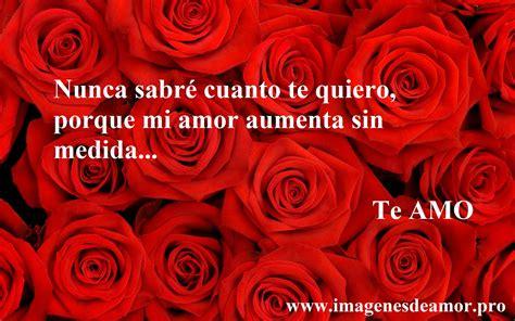imagenes te quiero ver mi amor 5 imagenes de hermosas rosas con frases cortas
