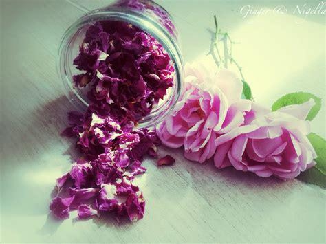 fiori di liquirizia il pollice verde notizie ed eventi su piante e