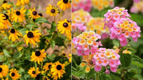 heat tolerant plants 12 heat resistant plants that gladly soak up the summer sun