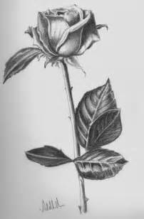 Draw On Pictures 1000 ideas about rose drawings on pinterest drawing step draw
