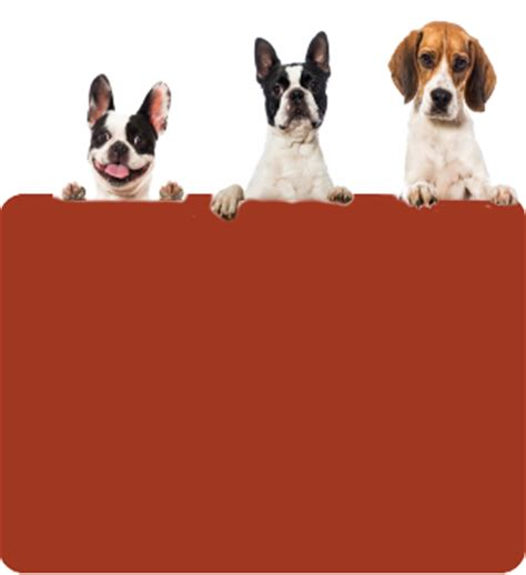 fairfield county shelter pet owners tips and education fairfield county shelter and adoption center