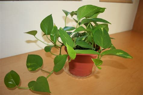 plants in home life as it comes decorating with house plants