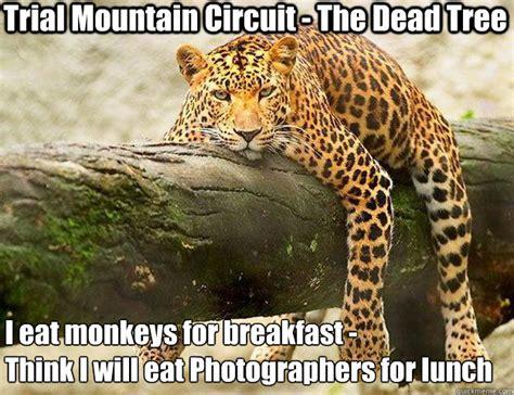 Jaguars Memes - lazy jaguar memes quickmeme