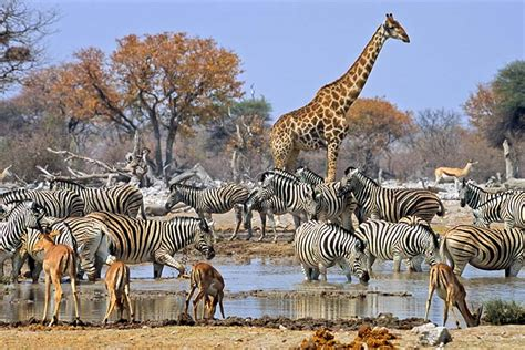 african safari animals african safari alternatives that don t cost a fortune