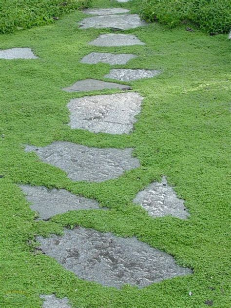 25 best ideas about lawn alternative on pinterest grass alternative moss lawn and plastic grass