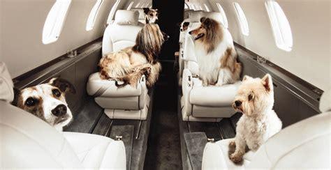 alitalia trasporto animali in cabina annastyle it 187 cani in cabina delta rivoluziona i viaggi
