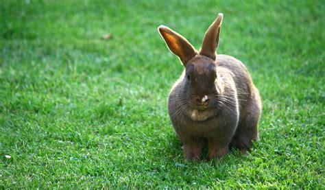 costruire gabbia coniglio recinto per conigli soluzione fai da te e pronta all uso