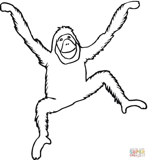 Outline Drawing Orangutan by Orangutan Coloring Page Free Printable Coloring Pages