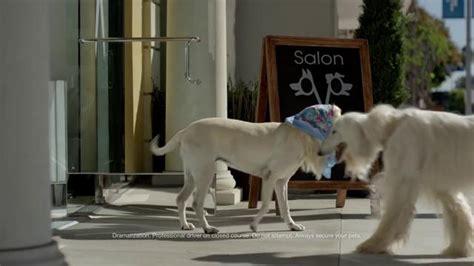 suburu hair salon dog suburu hair salon dog subaru tv spot dog tested bad hair