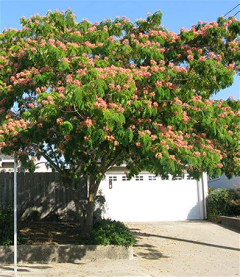mimosa drought tolerant trees san diego