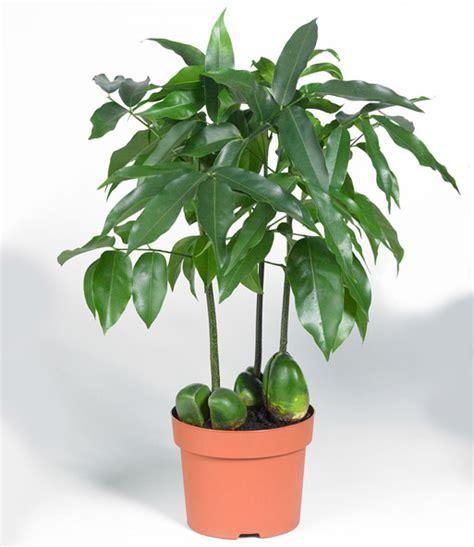 Die Beliebtesten Zimmerpflanzen 3950 die beliebtesten zimmerpflanzen die beliebtesten