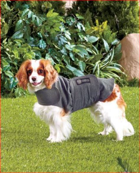 calming coat for dogs 3 gift ideas for dogs lakeside collection
