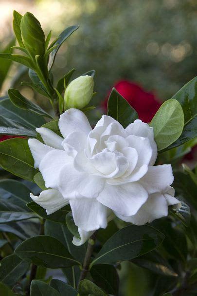 Bunga Plastik Hias Artificial Pot Pagar Kecil Mawar Fence Putih jenis jenis dan macam macam tanaman hias part iii jual tanaman hias