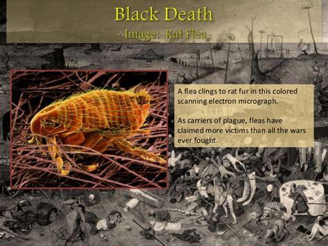 black death powerpoint medieval life the black death bubonic