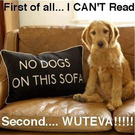 puppy jokes pic of the day best jokes and hilarious pics 4u