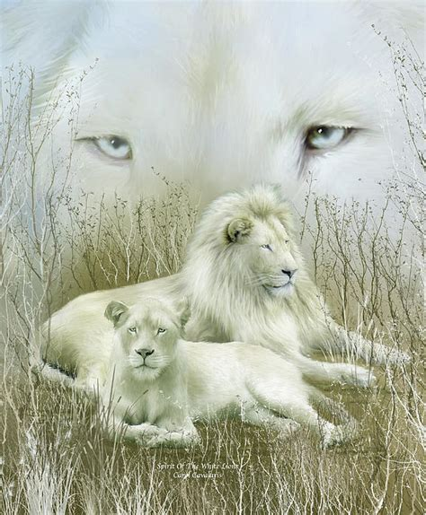 imagenes de leones albinos sabidur 205 a animal los leones blancos los mensajeros de