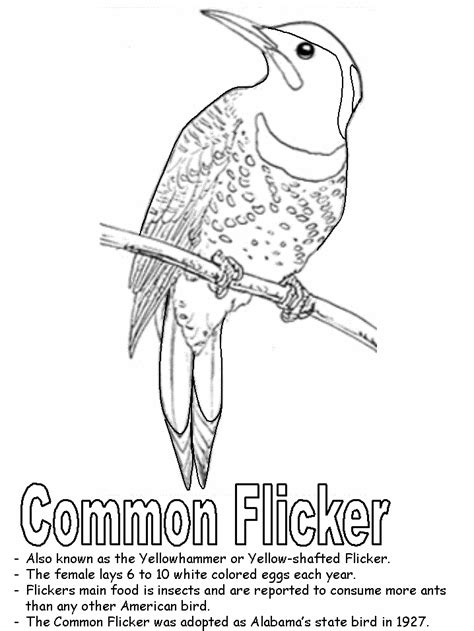 yellowhammer coloring page yellowhammer coloring page
