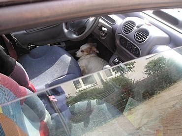 Hund Im Auto Hitze by Hund In Der Hitze Im Auto