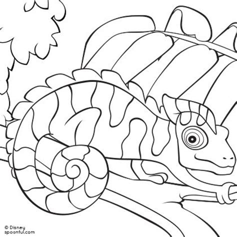 mixed up chameleon coloring page az coloring pages