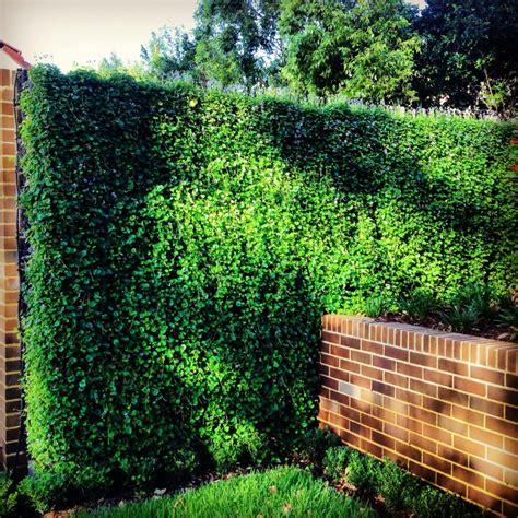 vertical gardens greenwalls wall gardens sydney