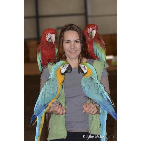 birds n all bird breeders dealers 17 bennett st