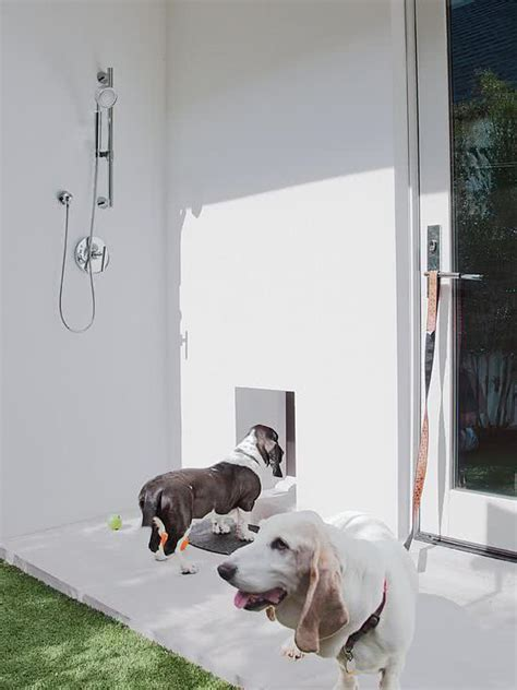 dog going to the bathroom in the house 45 ideias de decora 231 227 o e espa 231 o para os pets