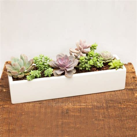 White Indoor Planter by Cool Succulent Planter New Home Gifts