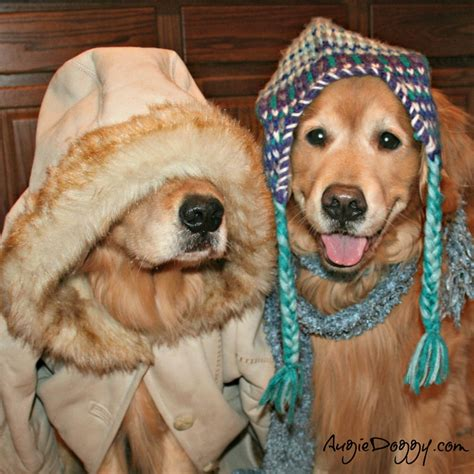 golden retriever costume for baby 10 best images about golden retrievers in costume on apps and hippies