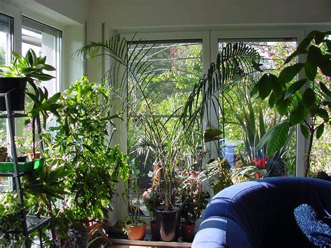 wohnung pflanzen gesunde pflanzen im winter