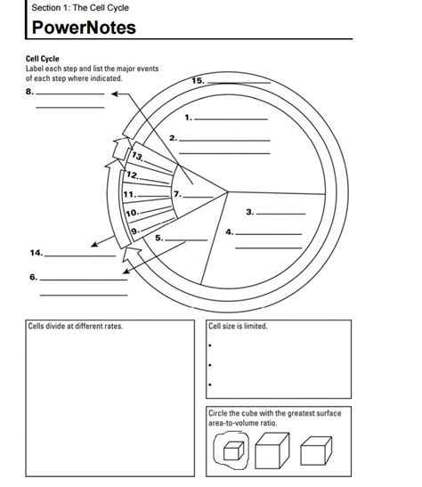 Cell Cycle Labeling Worksheet Answers by Pictures Cell Cycle Labeling Worksheet Getadating