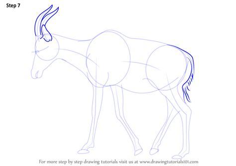 learn   draw  topi wild animals step  step drawing tutorials