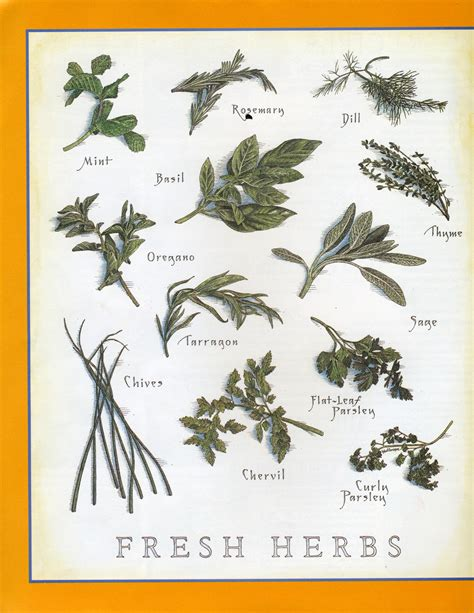 fresh planted herbs gastronomy pinterest fresh herbs cook s illustrated food cooks posters