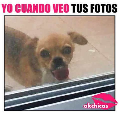 Memes De - 20 memes de perros que te har 225 n llorar de la risa