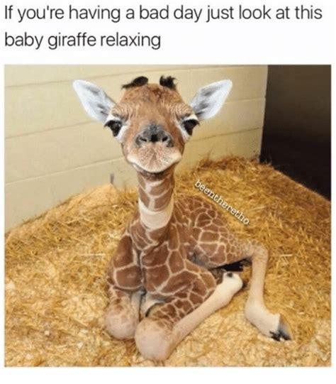 Giraffe Meme - giraffe meme www pixshark com images galleries with a